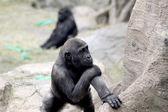 Bébé gorille — Photo
