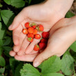 Handful of wild strawberries — Stock Photo #42894871