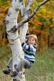 Cute little boy climbing on the tree — Stock Photo