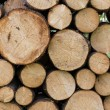 Piled logs — Stock Photo #16949851