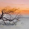 Sunset and the silhouette tree — Stock Photo
