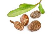 Shea nuts on white — Stock Photo