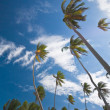 Palm trees against the sky — Stock Photo