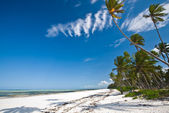 Playa tropical en zanzíbar — Foto de Stock