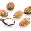 She nuts on white — Stock Photo