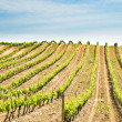 France, vineyard — Stockfoto #19739001