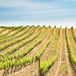 France, vineyard - Stock Photo