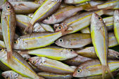 Fish in a market — Stock Photo