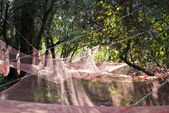 Nets for olives harvest — Stock Photo