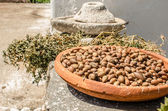 Argan fruits in a Women Cooperative in Essaouira — Stock Photo