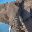 Elephant portrait - Ngorongoro national park — Stock Photo