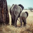 Stok fotoğraf: Mother and baby elephant