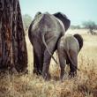 mãe e bebê elefante — Foto Stock
