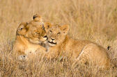 Lioness and her cub — Stock Photo