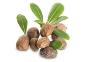 Group of Shea Nuts and leaves — Stock Photo