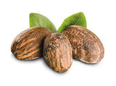 Shea Nuts with leaves — Stock Photo