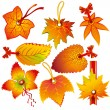 Autumn label - Stock Vector