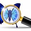 Stock Vector: Magnifier and butterfly