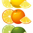 Citrus fruits — Vettoriali Stock