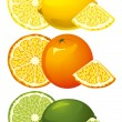 Citrus fruits — Stockvektor