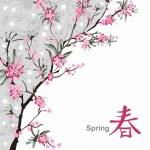 Sakura blossom — Stock Vector #16786405