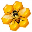 Bee on a part of honeycomb - Stock Vector