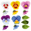 Vetorial Stock : Pansy