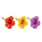 Set of hibiscus — Stock Vector
