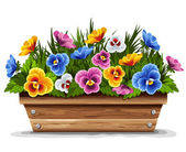 Wooden flower pot with pansies — Stock Vector