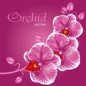Purple orchid — Stock Vector