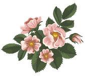Wild rose — Stock Vector