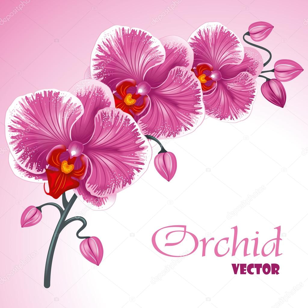 Orchid Vector