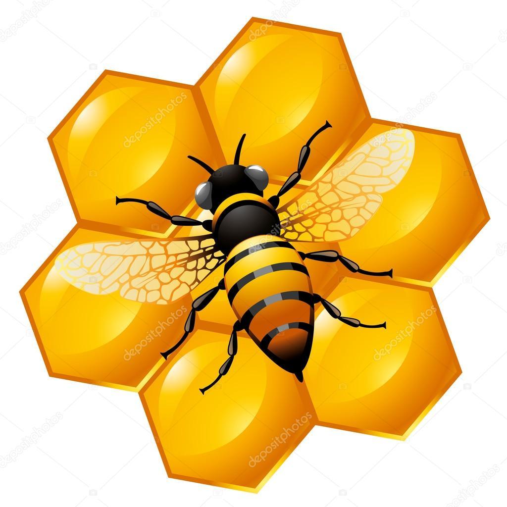 蜂蜂窝的部分 — 图库矢量图片