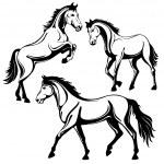 Horse — Stock Vector #28125493