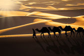 Desert caravan — Stock Photo
