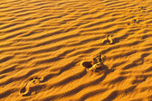 Footprints on sand — Stock Photo