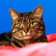 Adorable Kitten lying on bed with colorful background. — Stock Photo