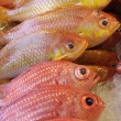Fishes — Stock Photo #18582279