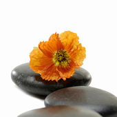Zen Still Life — Stock Photo
