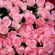 Roses background — Stockfoto #18820805