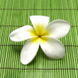 Beautiful frangipani flower — Stock Photo #22853268