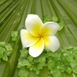 Plumeria and palm leaf texture - Stock Photo