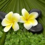 frangipanis and zen stones  — Stock Photo #22854480