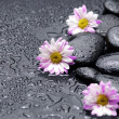 Stock Photo: Gerbera and stones