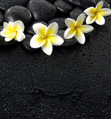 Frangipani on black peddles — Stock Photo