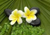 Frangipanis and zen stones — Stock Photo