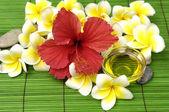 Many frangipani — Stock Photo