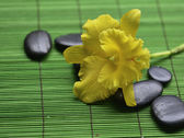 Yellow orchid with stones — Stock Photo