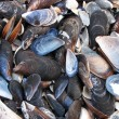 Mussel shells — Stock Photo