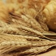 Ears of wheat and bread — Stock Photo